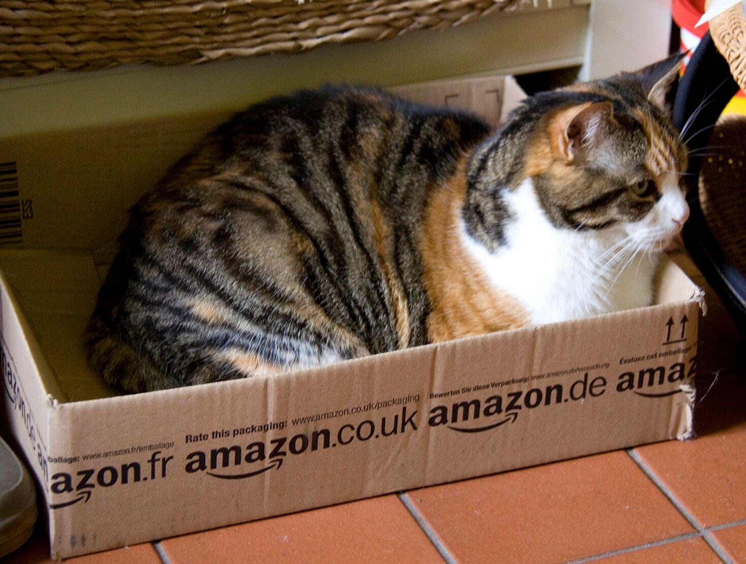 Upcycling: kot w pudełku wysyłkowym