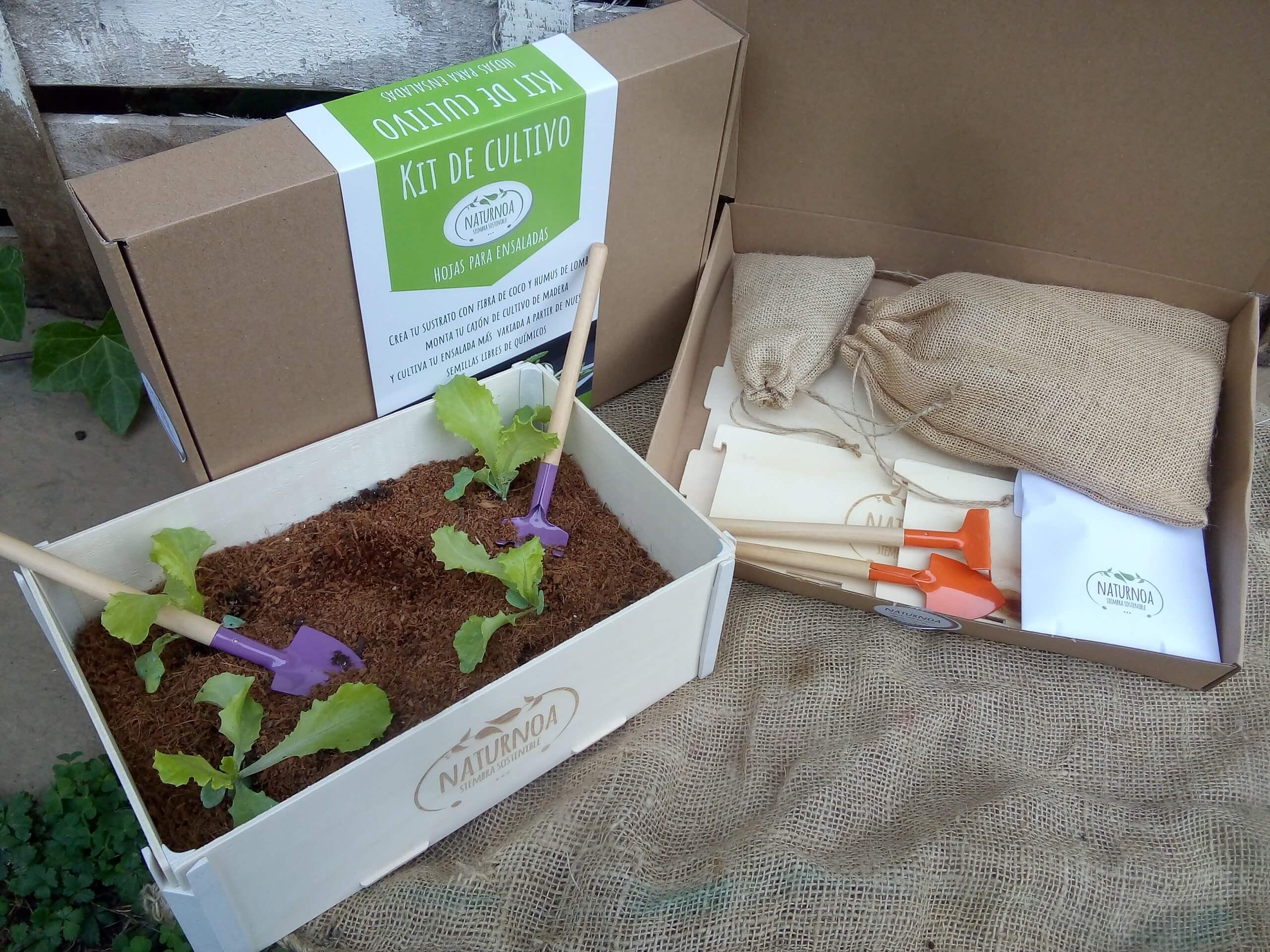 cajas de cartón para enviar kits de cultivo