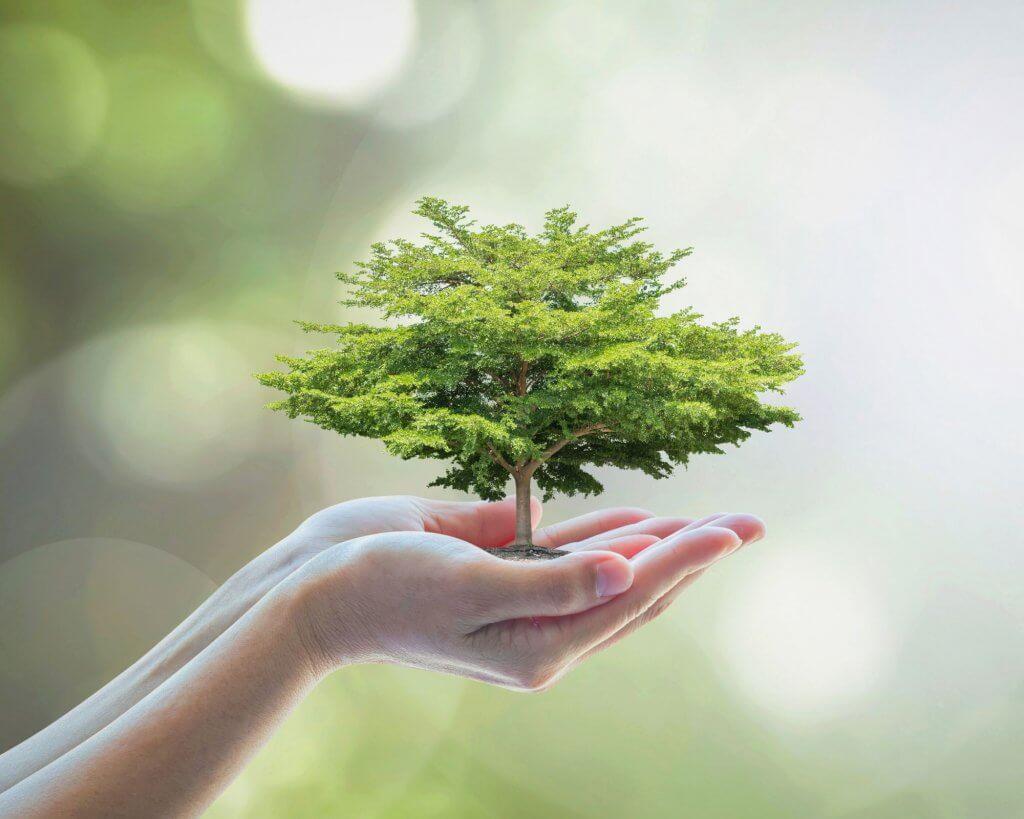 unas manos sostienen un árbol pequeño