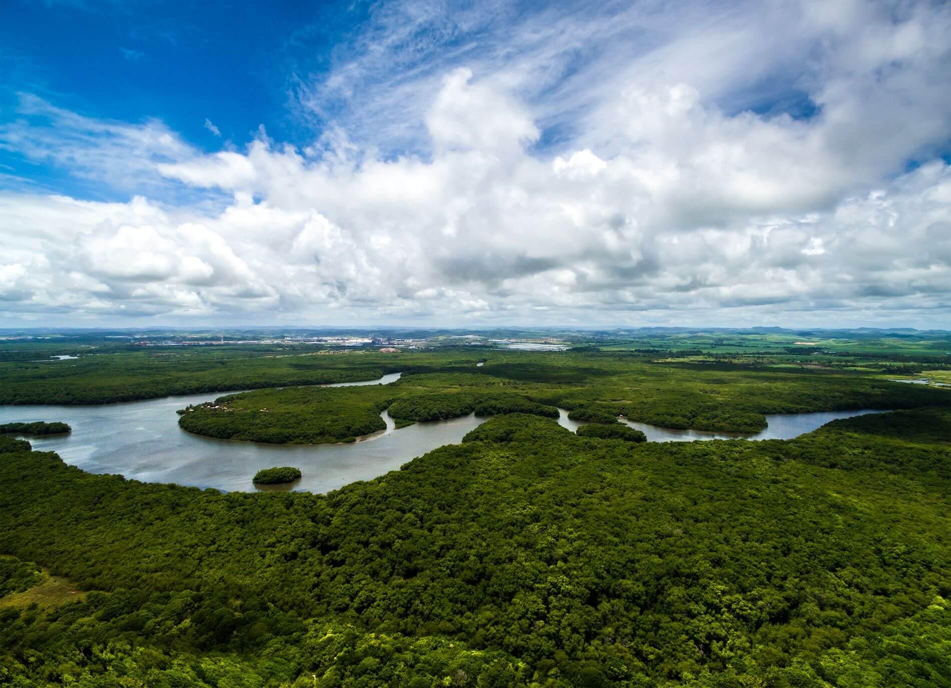 Vue sur la forêt amazonienne et sa rivière