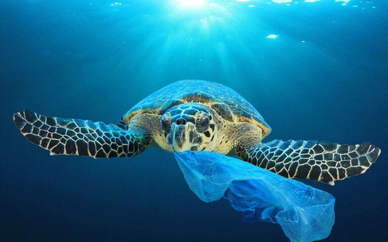 Les solutions alternatives à l'emballage plastique