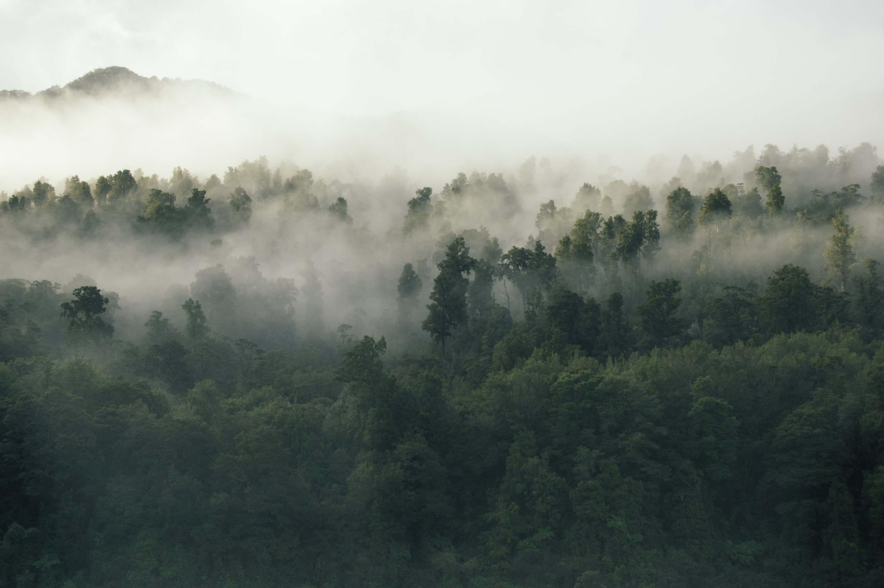 Forêt plongée dans la brume