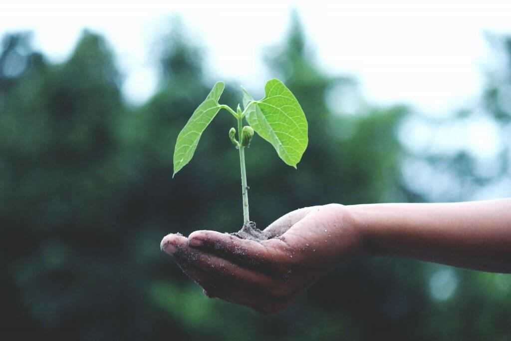 Person holding green plant in hand