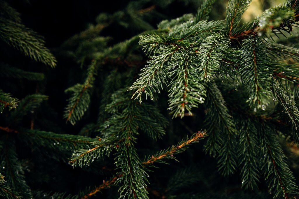 christmas tree recycli