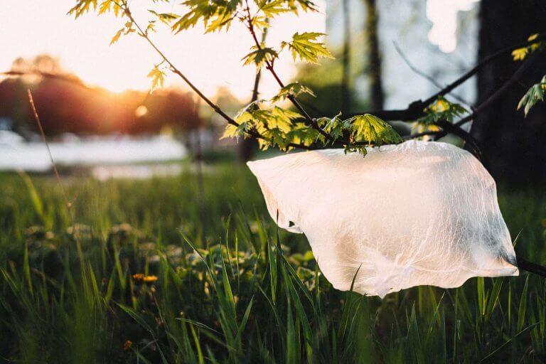 Greenwashing : tout ce que vous devez savoir