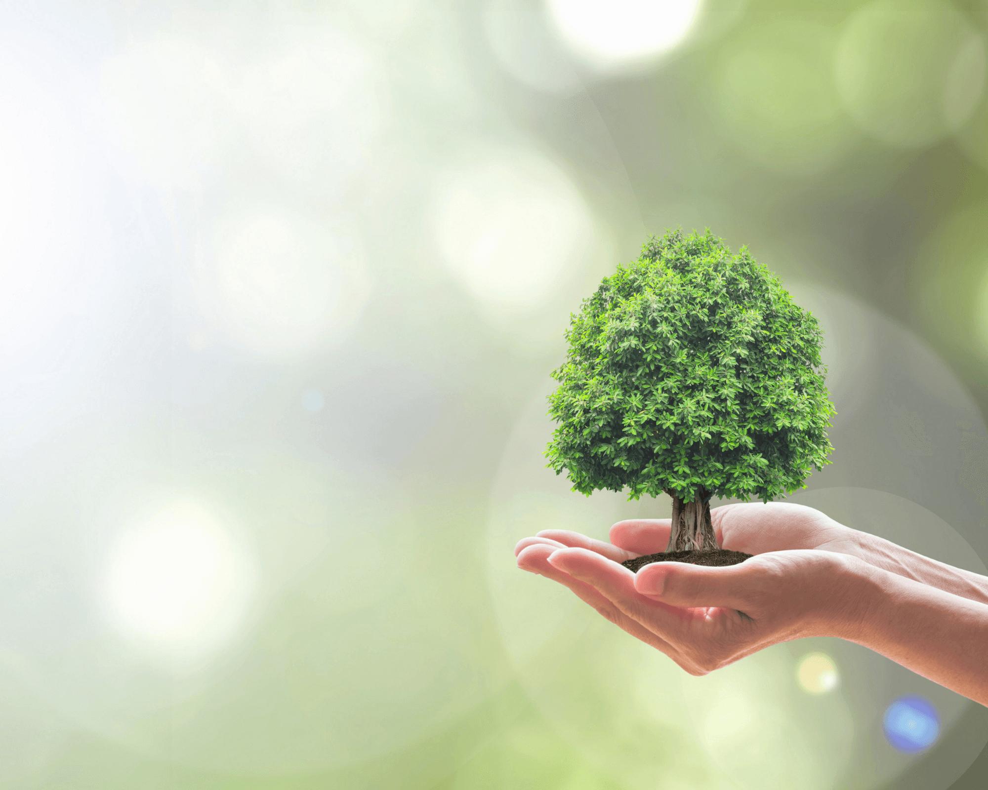 tener una empresa sostenible beneficia también al planeta