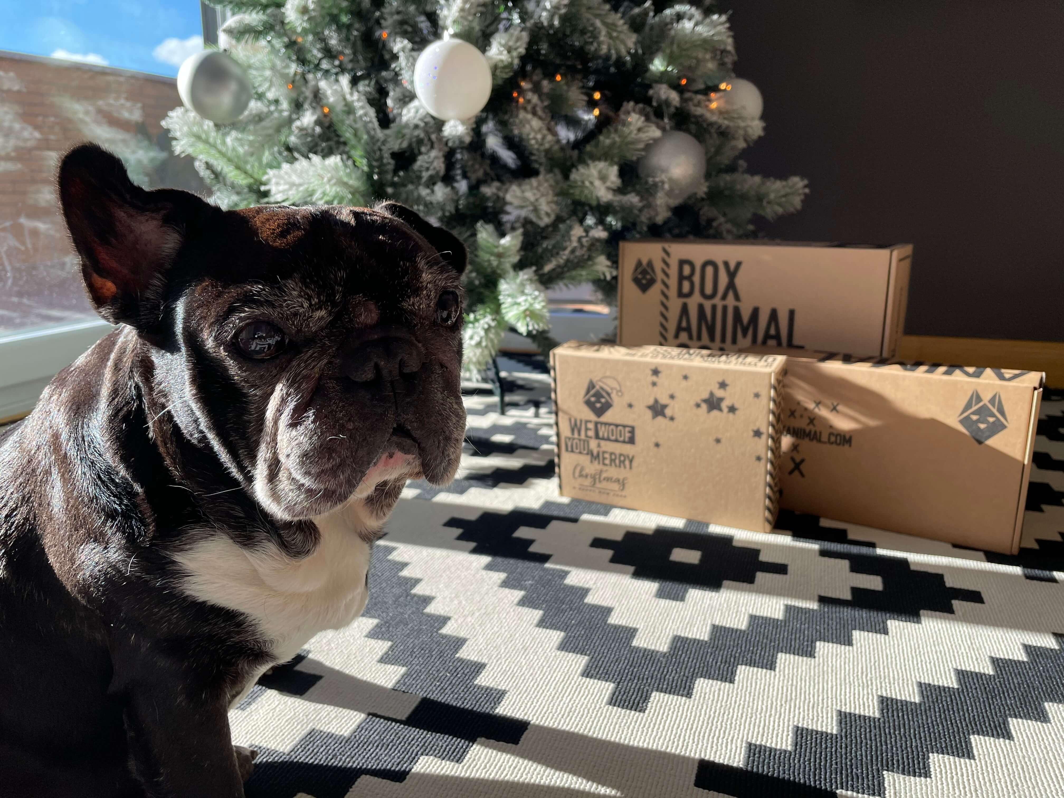 un perro sentado junto a varias cajas postales