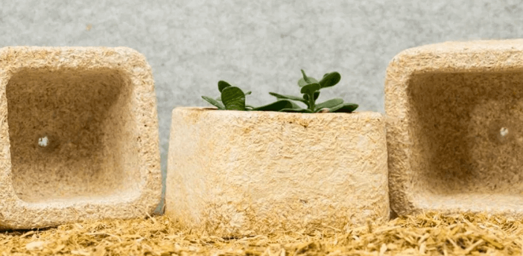 tendencias de packaging en 2021: sostenibilidad