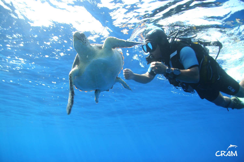 Un buzo nadando junto a una tortuga
