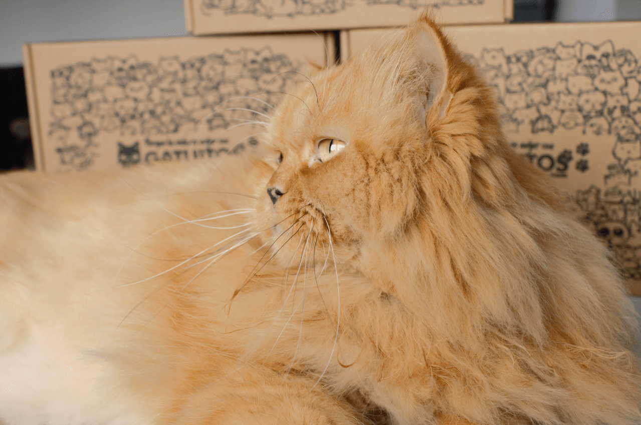 un gatito junto a varias cajas de cartón