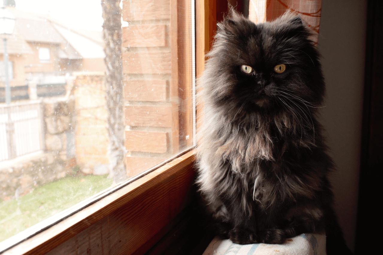 un gatito sentado junto al alféizar