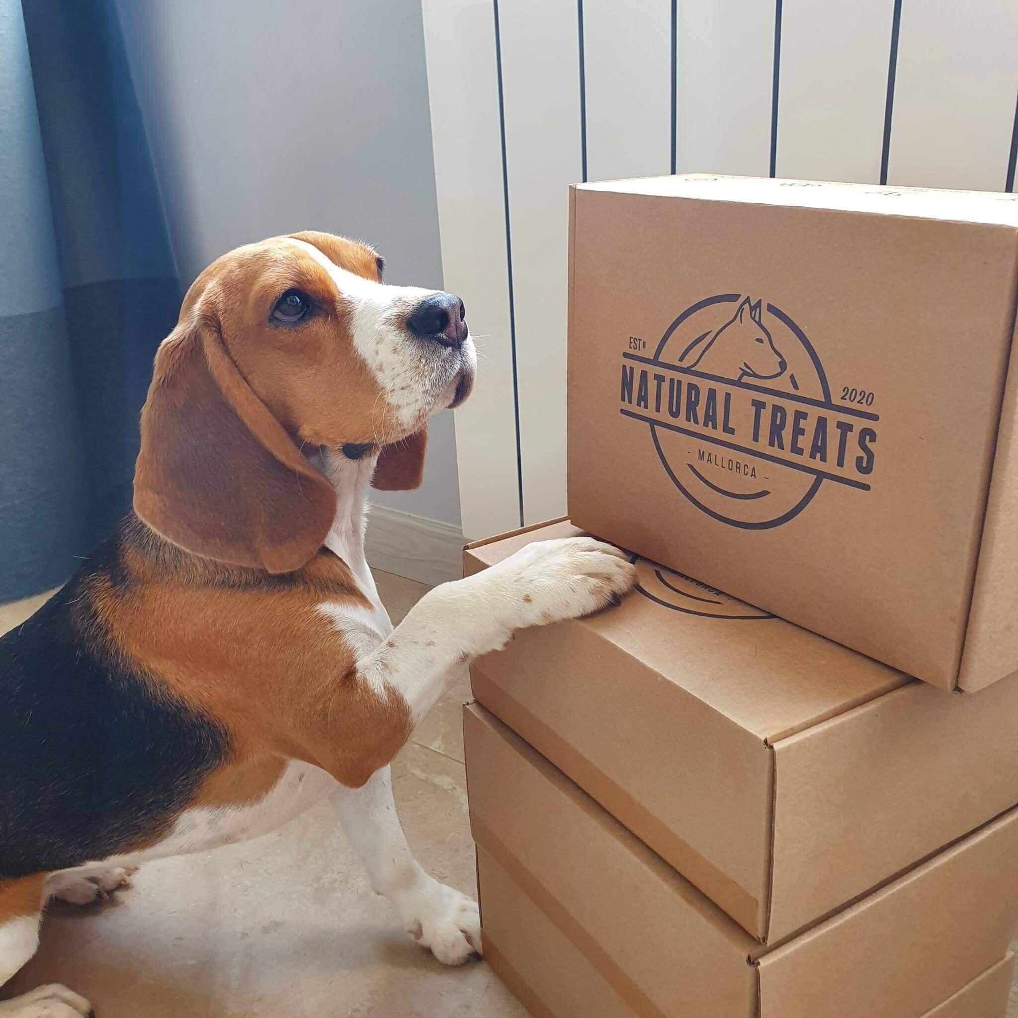 un beagle junto a varias cajas de cartón