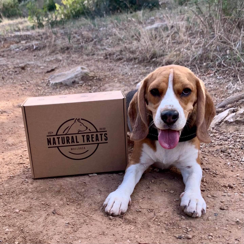 un beagle junto a una caja de Natural Treats