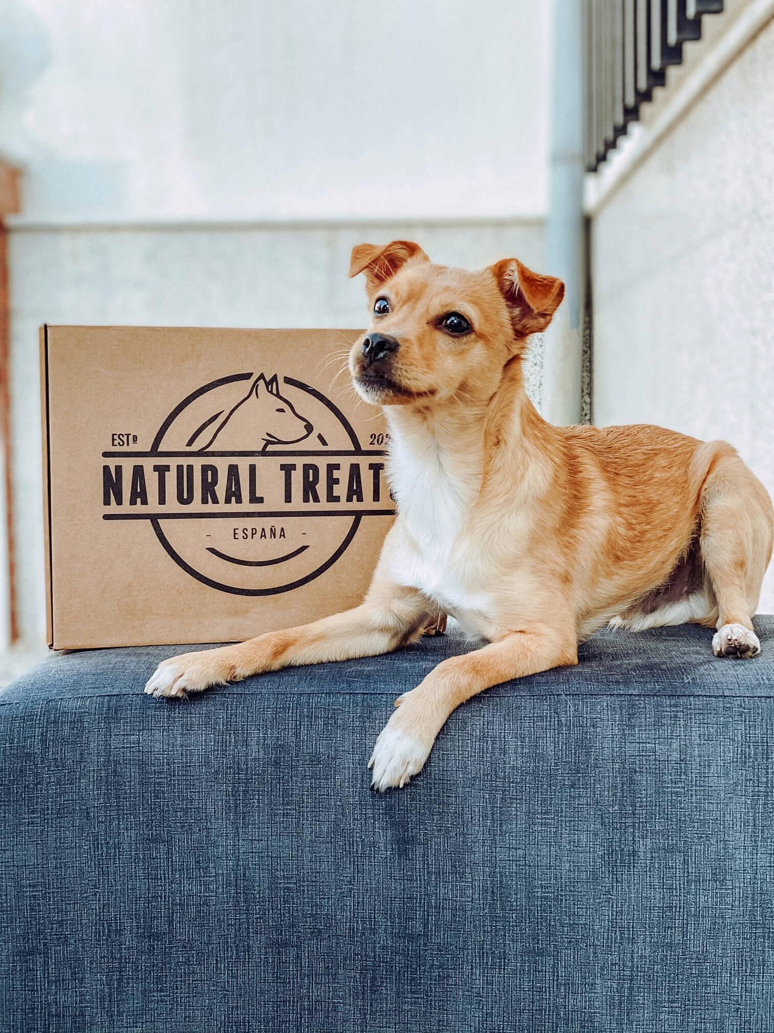 un perrito posa junto a una caja postal