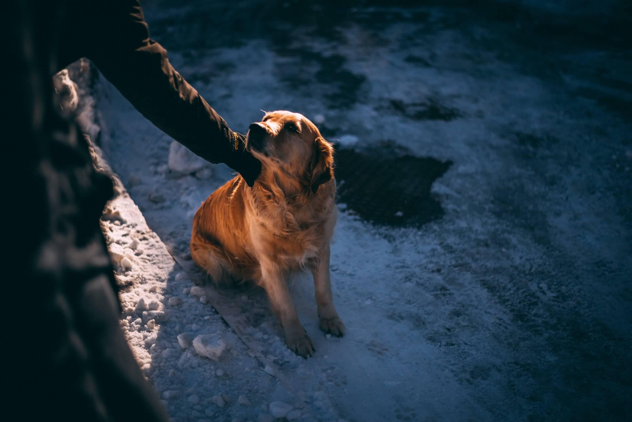 beneficenza per cani