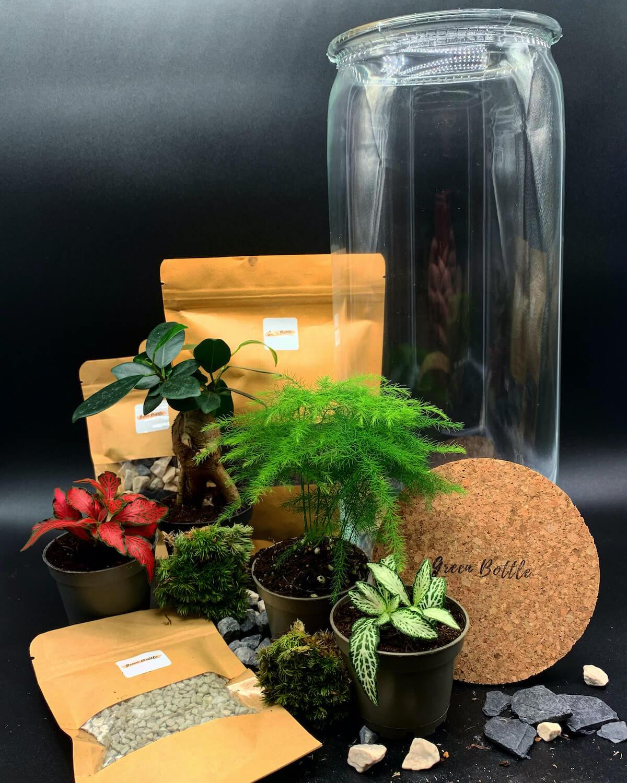 Terrarium de Green Bottle Design et plantes