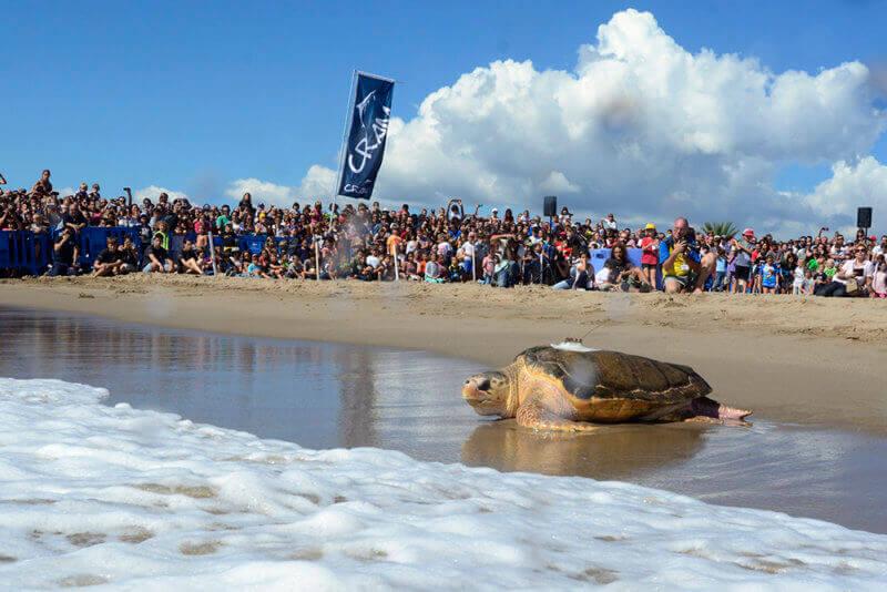 una tartaruga ritorna nell'oceano
