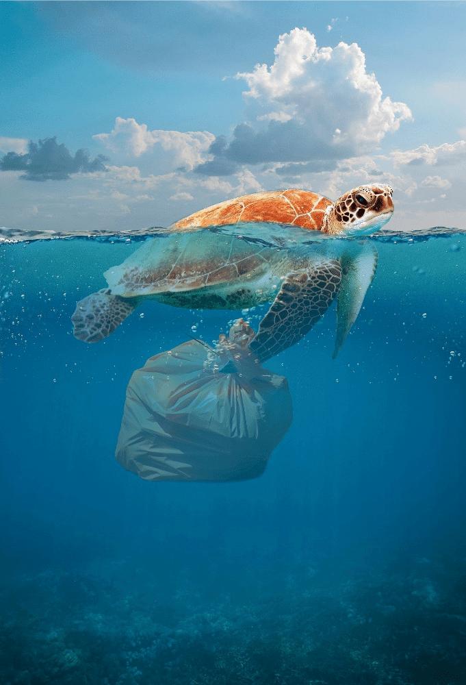 fauna marina con plastica