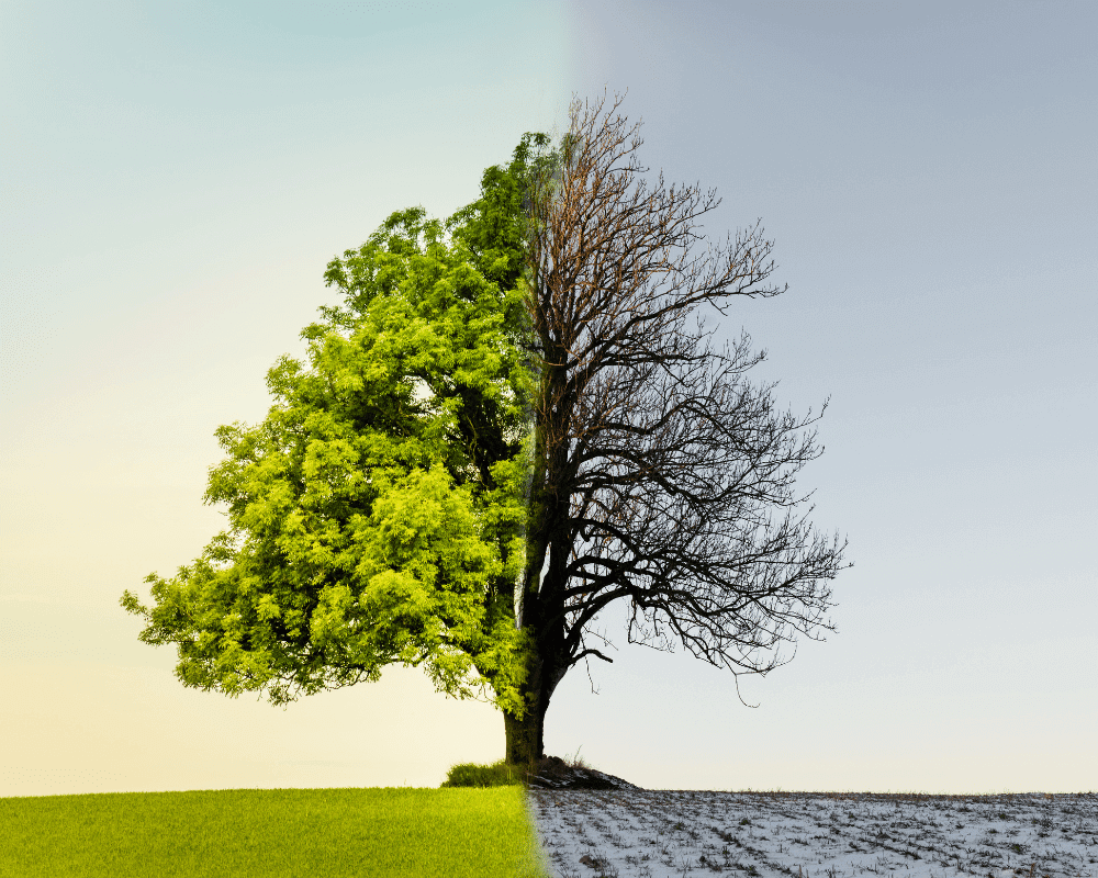 el cambio climático afecta a la vegetación y los árboles